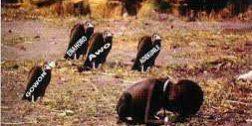Igbo Land Dying