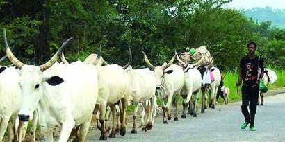 Cattles-herdsmen