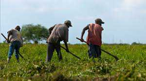 labours-in-the-farms-