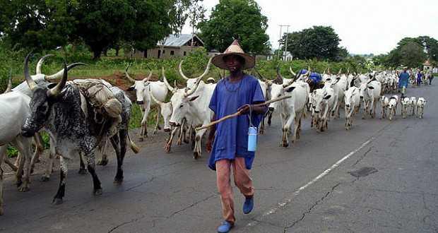 Herdsmen in Imo State